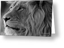 Wild Lion Face Greeting Card