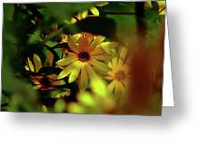 Wild Sunflower Greeting Card