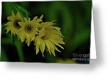 Wild Sunflowers In The Wind Greeting Card