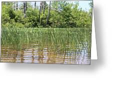 Wild Waters Greeting Card