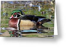 Wild Wood Duck On The Old Mill Pond  Greeting Card