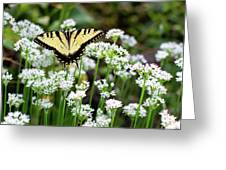 Wildflower Butterfly Greeting Card
