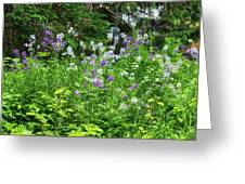 Wildflowers On Green's Hills Greeting Card