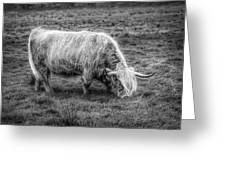 Windblown In Scotland Black And White Greeting Card
