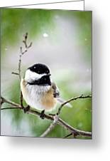 Winter Black Capped Chickadee Greeting Card