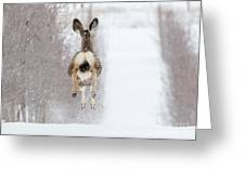 Winter Bounce Greeting Card