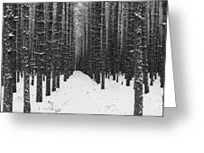 Winter Forest In Black And White Greeting Card