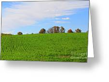 Winter Wheat In October In Southern Ontario Greeting Card