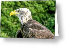 Wisconsin Bald Eagle Greeting Card