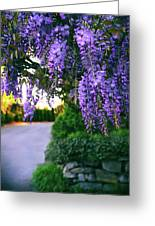 Wisteria At Sunset Greeting Card