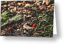 Witch's Hat Mushrooms Greeting Card