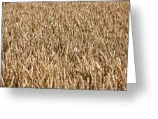 Wonderful Wheat Greeting Card