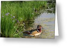 Wood Duck And Iris Greeting Card by Patti Deters