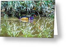 Wood Duck Reflection Greeting Card