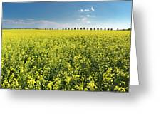 Yellow Canola Field And Blue Sky Spring Landscape Greeting Card