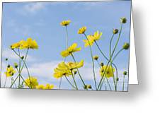 Yellow Cosmos Flowers With Light Blue Greeting Card