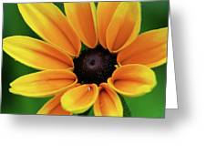 Yellow Flower Black Eyed Susan Greeting Card