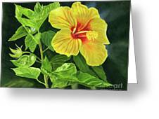 Yellow Hibiscus With Bright Green Leaves Greeting Card