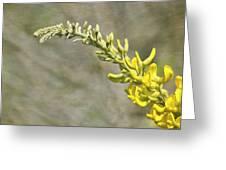 Yellow Lupine Greeting Card by Carolyn Marshall