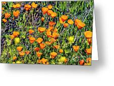 Yellow Poppies Of California Greeting Card