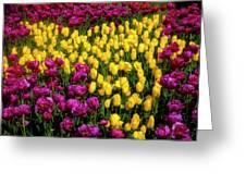 Yellow Star Tulips Greeting Card