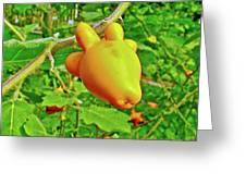 Yellow Tomato In The Amazon Jungle, Peru Greeting Card