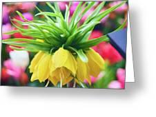 Yellow Tulip Close Up Greeting Card
