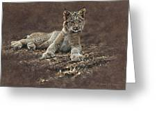 Young Bobcat By Alan M Hunt Greeting Card by Alan M Hunt