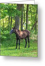 Young Brown Colt Greeting Card