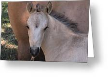 Young Colt Greeting Card