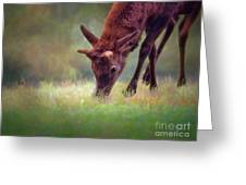 Young Elk Grazing Greeting Card