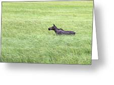 Young Moose Greeting Card