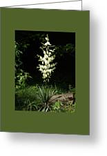 Yucca Blossoms Greeting Card