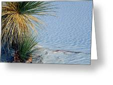 Yucca Plant In Rippled Sand Dunes In White Sands National Monument, New Mexico - Newm500 00113 Greeting Card