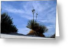 Yucca Plant In Rippled Sand Dunes In White Sands National Monument - Newm500 00107 Greeting Card
