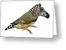 Z Is For Zebra Finch Thats Not A Zebra Finch Greeting Card