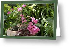 Crescent Light On Tropicals Greeting Card
