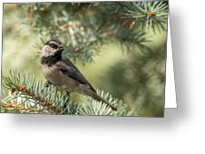 Mountain Chickadee Photograph By Constance Puttkemery