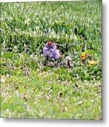 Sparrow Metal Print