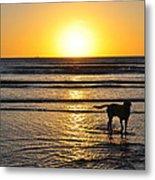 A Mans Best Friend Sunset Metal Print