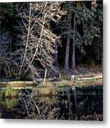 Alder Tree Reflection In Pond Metal Print
