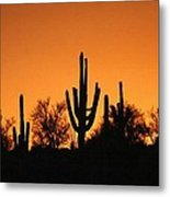 Arizona Sagurao Sunset Metal Print