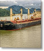 Avocet In The Panama Canal Metal Print