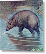 (babirusa Alfurus)        Date 1909 Metal Print