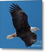Bald Eagle In Flight 6 Metal Print