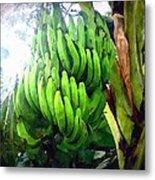 Banana Plants Metal Print