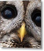 Barred Owl Eye's Metal Print