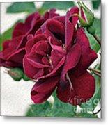 Beautiful Red Roses Metal Print