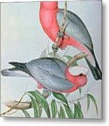 Birds Of Asia Metal Print