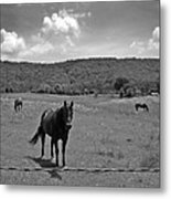 Black And White Pasture With Three Horses Metal Print